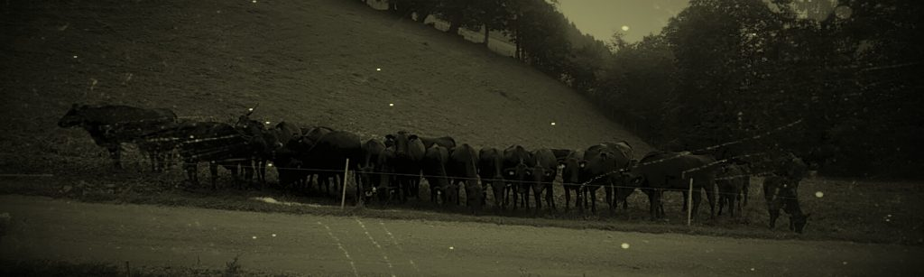 Beef Alpin Salzburg